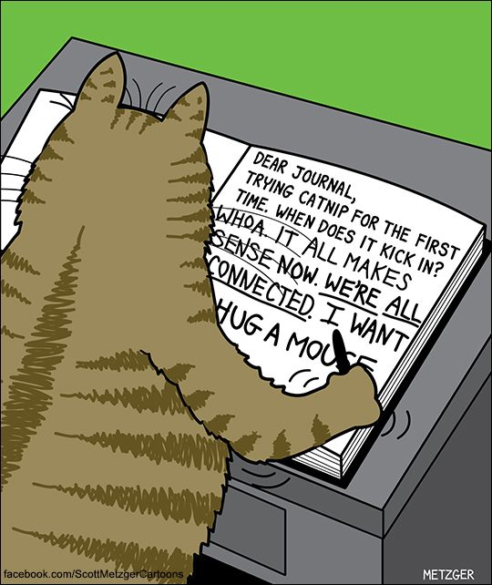 Catnip Cartoon